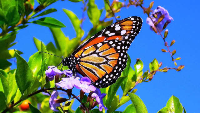 Spring-Flowers-And-Butterflies-2